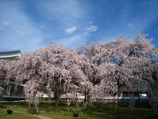 2009_0329_kyoto (5).JPG