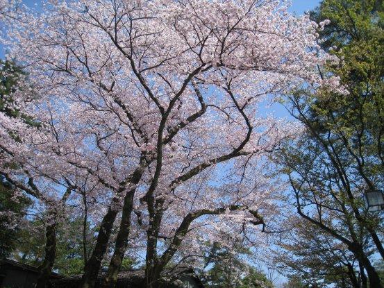 2009_0412_kanazawa (33).JPG