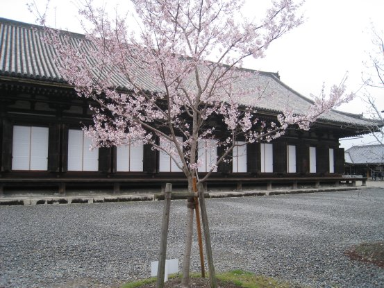 2010_0323_kyoto (17).JPG