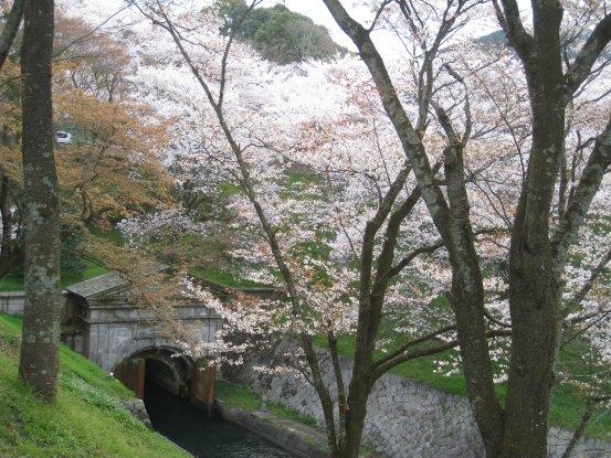 2010_0410_sakura (27).JPG